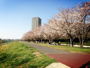 桜2.jpgのサムネール画像